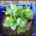 外出自粛中、家庭菜園を始めました(*^▽^*)